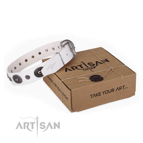 High quality genuine leather dog collar created for everyday walking