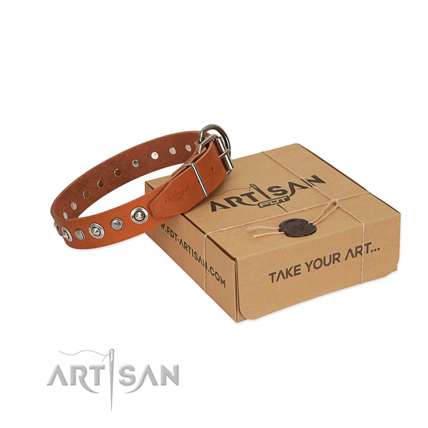 Reliable leather dog collar with stylish design embellishments