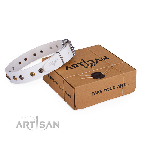 Everyday walking dog collar with Trendy durable studs
