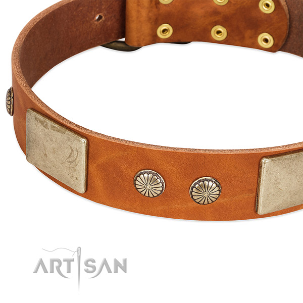 Corrosion resistant decorations on natural genuine leather dog collar for your canine