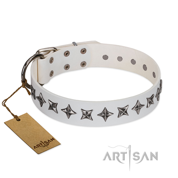 Daily walking dog collar of durable leather with embellishments