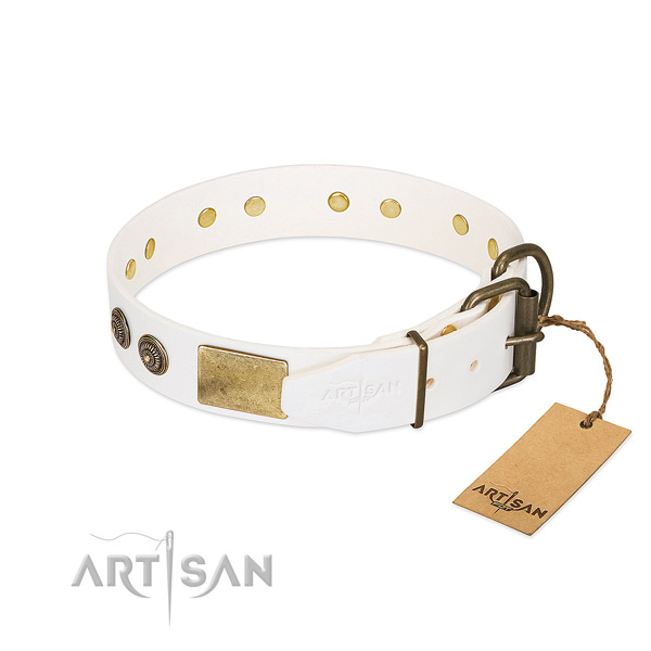 Strong traditional buckle on leather collar for fancy walking your canine