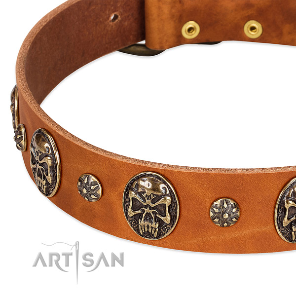 Corrosion proof adornments on full grain genuine leather dog collar for your doggie