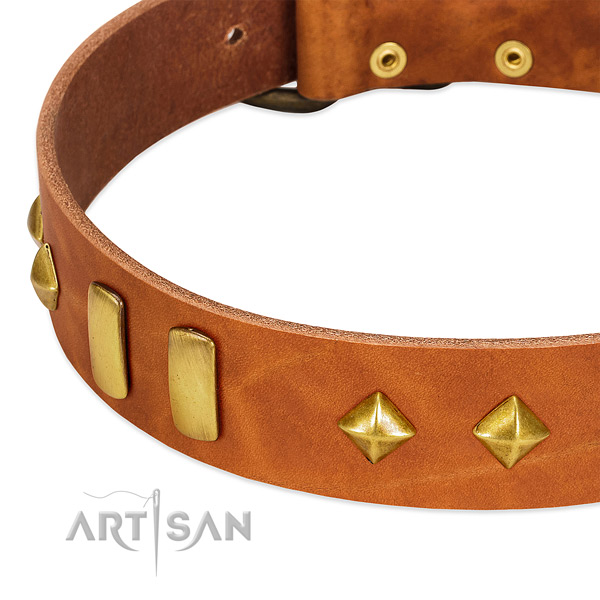 Walking full grain leather dog collar with incredible studs
