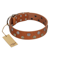 """Ancient Symbol"" Trendy FDT Artisan Tan Leather English Bulldog Collar with Silver- and Gold-Like Studs"
