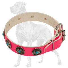 Pink Leather English Bulldog Collar with Strong Buckle