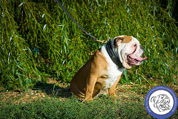 Double Ply Leather English Bulldog Collar