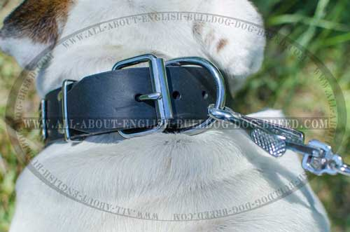 D-Ring on Leather Dog Collar