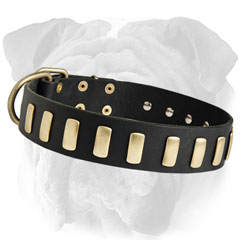 Strong leather English Bulldog Collar