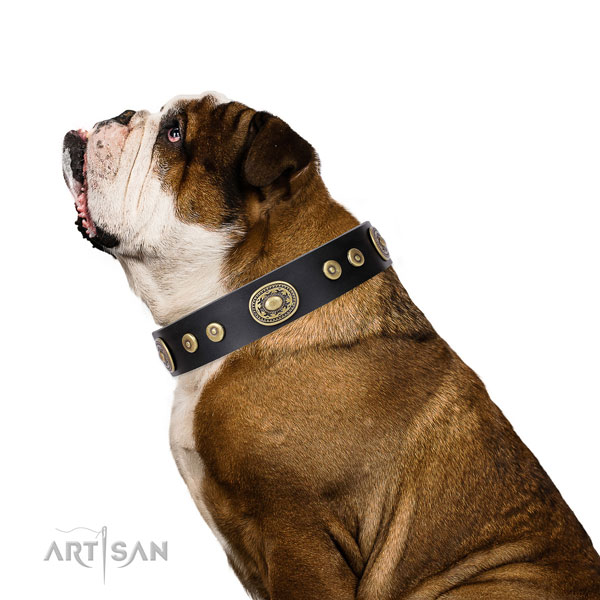 Stylish design studded natural leather dog collar for everyday use