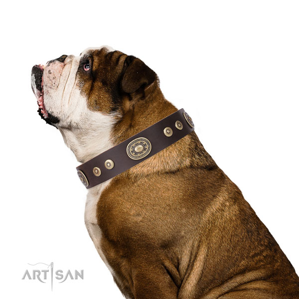 Fashionable decorated leather dog collar for daily walking