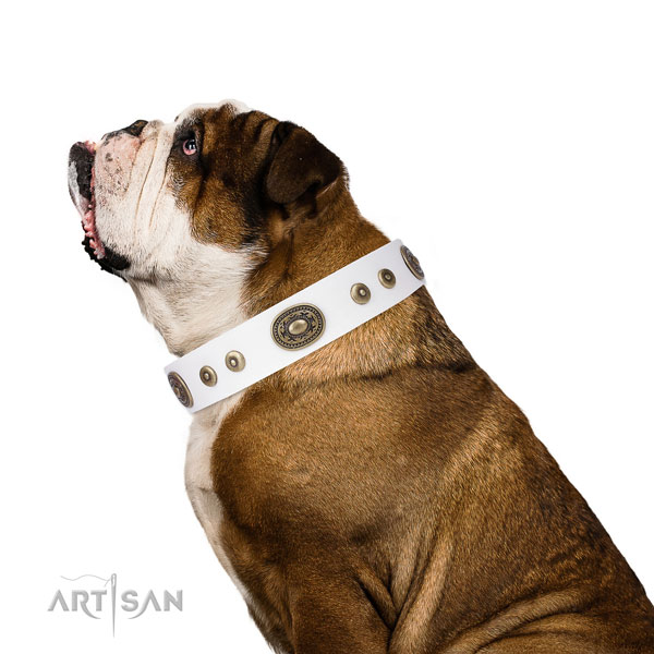 Top notch studded natural leather dog collar for walking