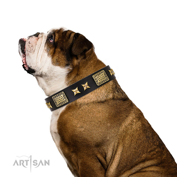Everyday use dog collar with exceptional embellishments