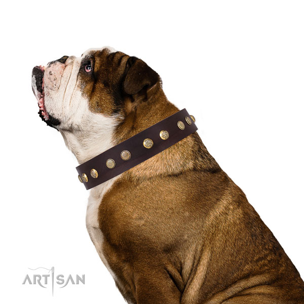 Exceptional embellishments on basic training genuine leather dog collar