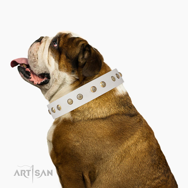 Unique studs on fancy walking genuine leather dog collar