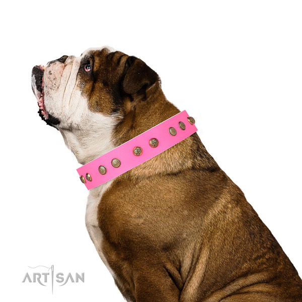 Impressive adornments on easy wearing leather dog collar