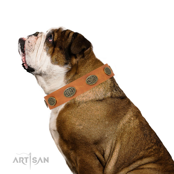 Fashionable adornments on comfortable wearing full grain genuine leather dog collar
