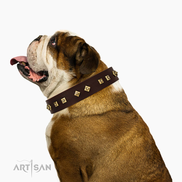 Significant adornments on easy wearing full grain natural leather dog collar