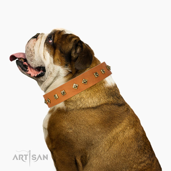 Inimitable adornments on stylish walking dog collar