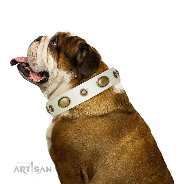 Fancy walking dog collar of genuine leather with unique adornments