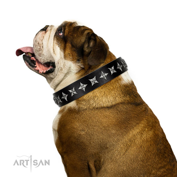 Everyday walking adorned dog collar of reliable genuine leather