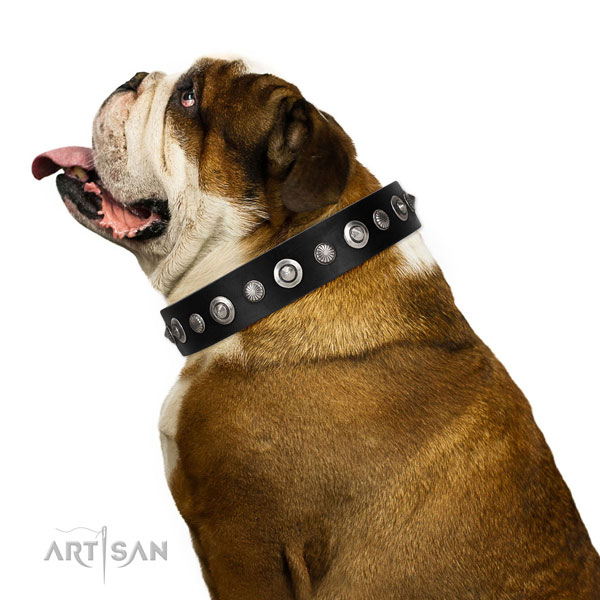 High quality full grain leather dog collar with top notch decorations