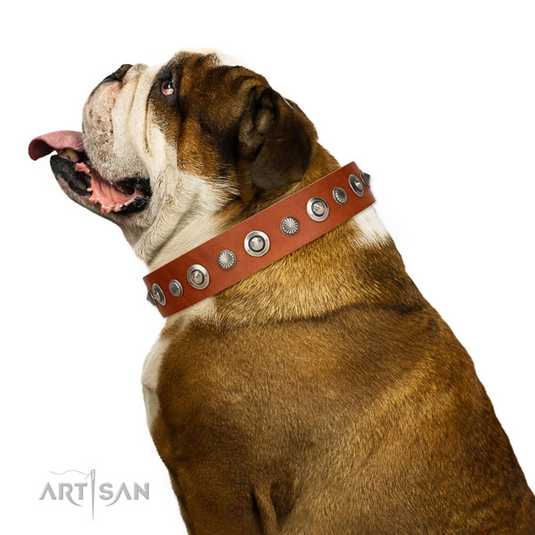 Finest quality natural leather dog collar with fashionable studs