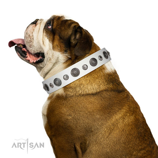 Impressive full grain genuine leather dog collar with corrosion proof fittings