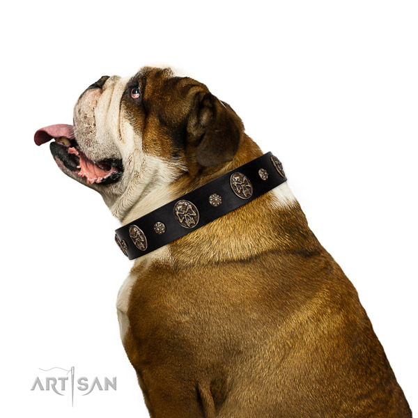 Comfortable wearing dog collar of leather with stunning adornments