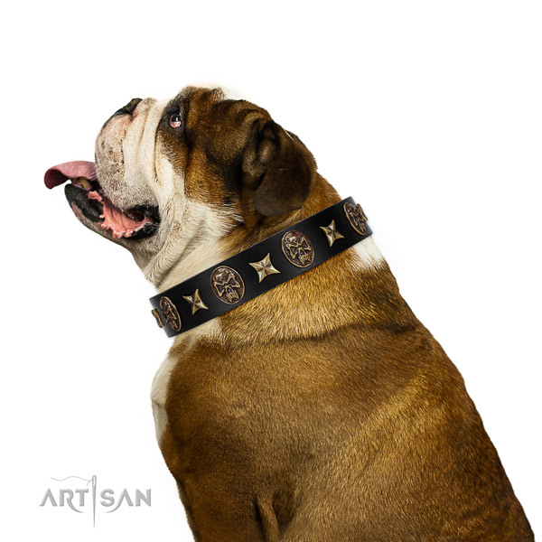 Everyday use dog collar of leather with significant decorations