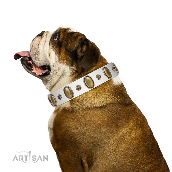 Stylish walking best quality leather dog collar with adornments