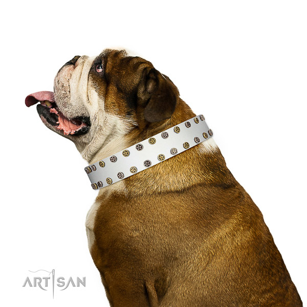 Stylish genuine leather dog collar with reliable adornments