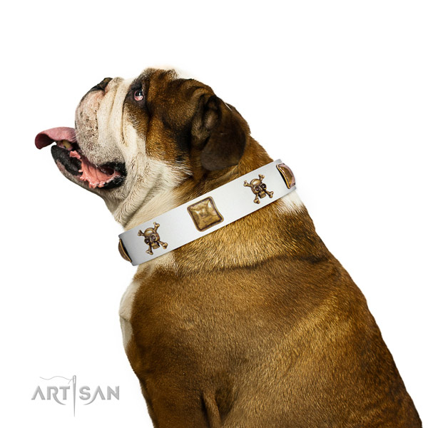 Impressive full grain leather dog collar with reliable adornments