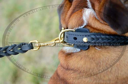 Leather English Bulldog Collar with Brass Fittings