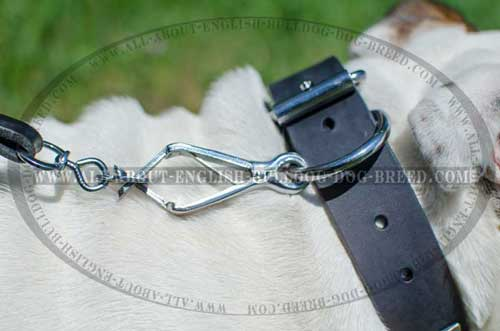 Exclusive Leather English Bulldog Collar