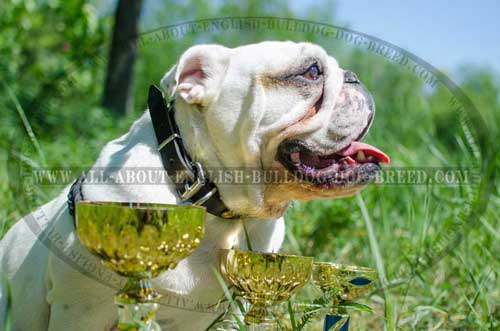 Durable Leather Collar for English Bulldog