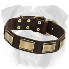 Riveted Leather English Bulldog Collar