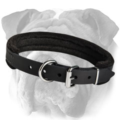 English Bulldog Padded Leather Collar Rustproof Hardware