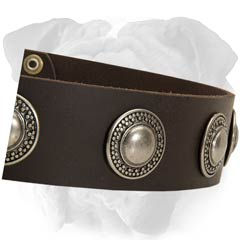 English Bulldog Plated Conchos Leather Collar Polished Edges