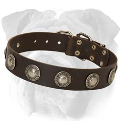 Genuine Leather English Bulldog Collar with Conchos