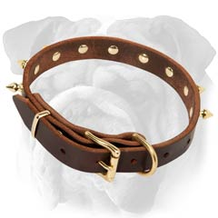English Bulldog Spiked Leather Collar Non-Toxic