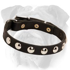 English Bulldog Studded Leather Collar Rustproof Decoration