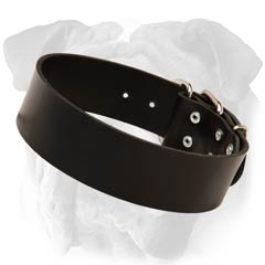 English Bulldog Wide Leather Collar Dog Walking