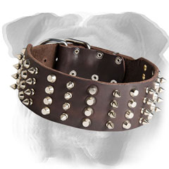 English Bulldog collar with nickel decorations