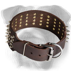 Easy adjustable leather collar for English Bulldog