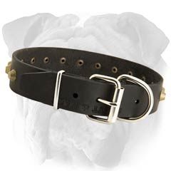 Strong English Bulldog Studded Leather Collar  with Rustproof Hardware
