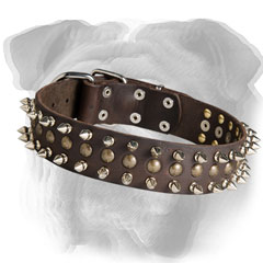 English Bulldog collar with spikes and studs