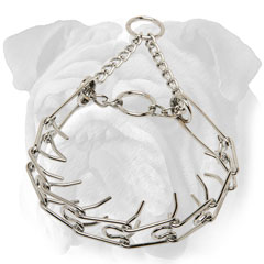 Chrome plated English Bulldog pinch collar with blunt  prongs