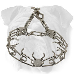English Bulldog prong collar with scissors-like snap hook