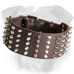 Leather English Bulldog collar with spikes and studs